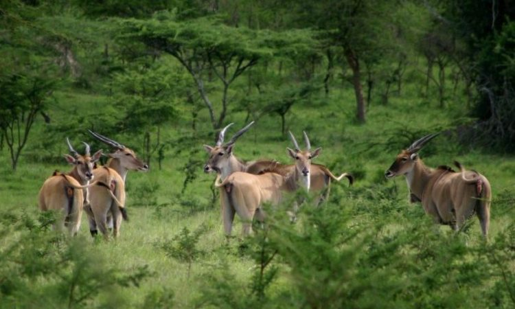 2 Days Lake Mburo Safari