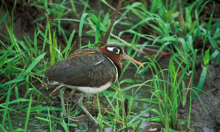 Birding in Lake Mburo