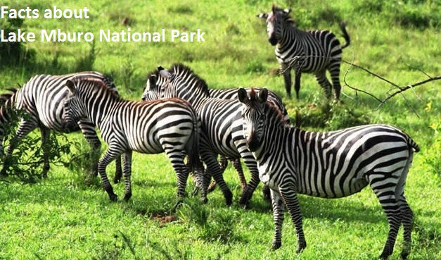 Facts about Lake Mburo National Park