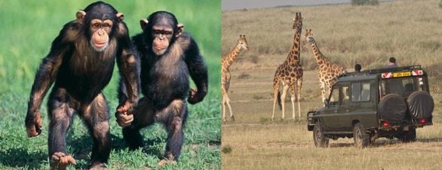Primates Tracking