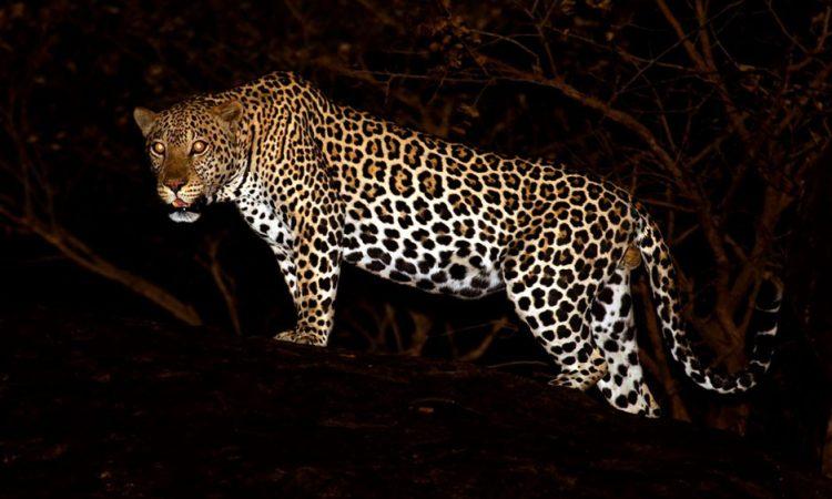 Wildlife in Lake Mburo National Park
