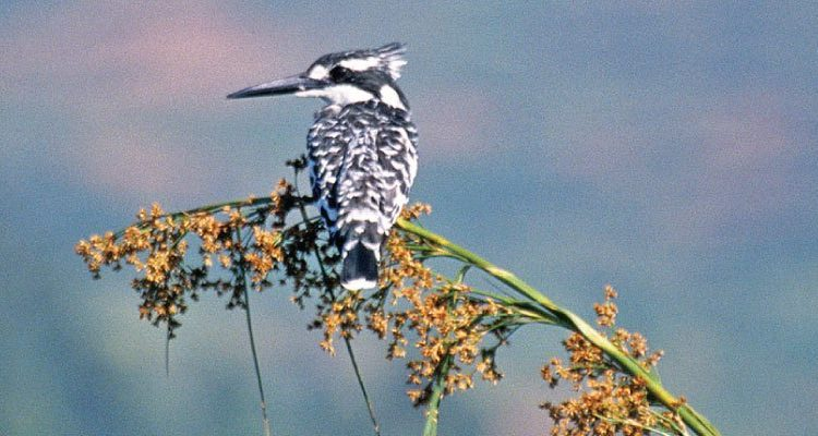 Birding Safaris in Lake Mburo