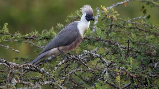lake mburo park birds