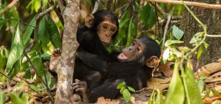 3 Days Uganda Chimpanzee & Wildlife Safari