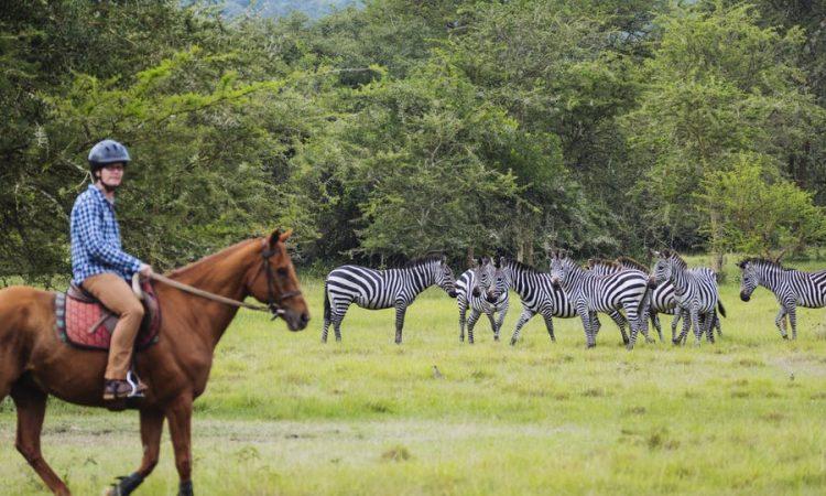 5 Days Lake Mburo & Queen Elizabeth Safari
