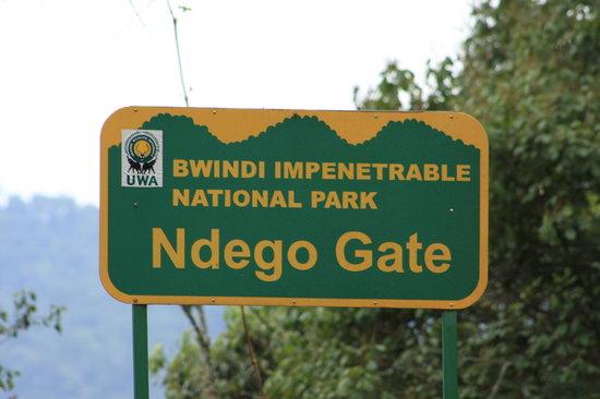 Gorilla Trekking Destinations in Uganda