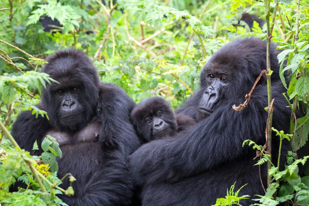 Gorilla Trekking Sectors in Bwindi Forest