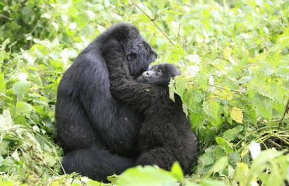 Gorilla Trekking Sectors in Bwindi Forest
