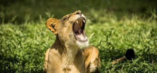 19 Days Best of Uganda Safari Tour