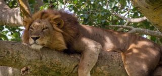 4 Days Queen Elizabeth Wildlife & Chimpanzee safari