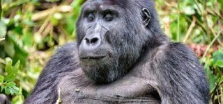 7 Days Uganda Wildlife & Gorilla Trekking Safari