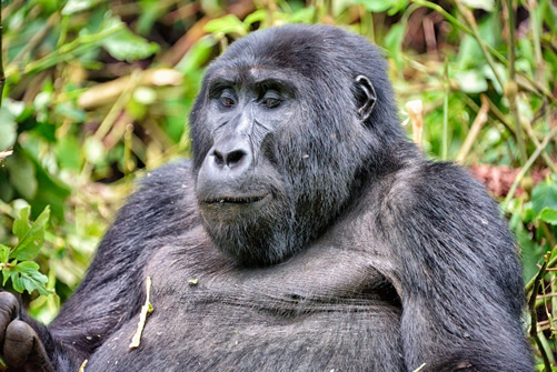 7 Days Uganda Wildlife & Gorilla Trekking Safari