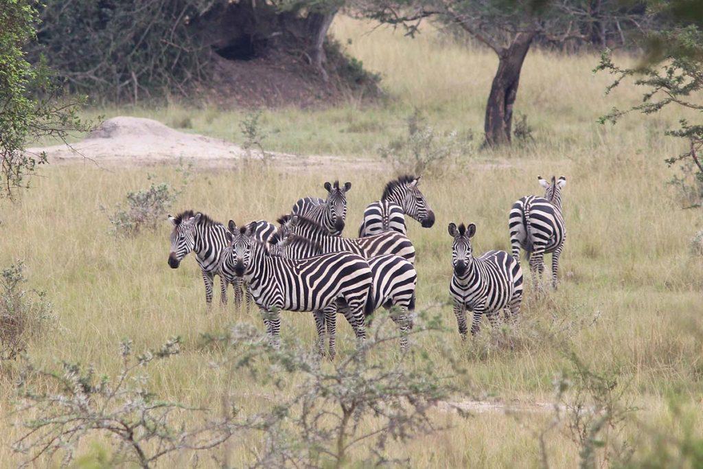 5 Days Lake Mburo and Lake Bunyonyi Safari