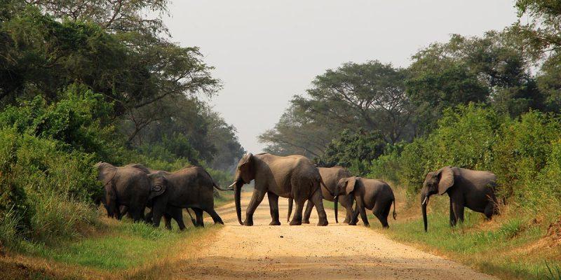 10 Days Explore Uganda Adventure Safari