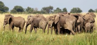 4 Days Uganda Wildlife & Primates Safari