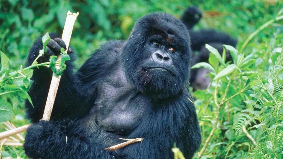 6 Days Murchison Falls & Bwindi Forest Safari