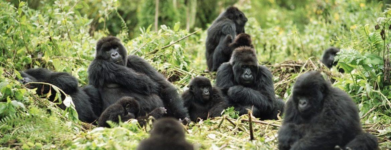 Nkuringo Gorilla Sector Bwindi