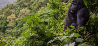 Getting to Bwindi Impenetrable national park