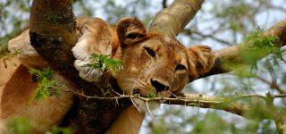 4 Days Queen Elizabeth & Kibale Forest Tour