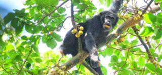 Wildlife in Kibale National Park Uganda