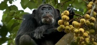8 Days Uganda Primates and Wildlife Safari